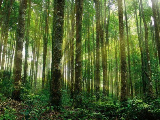 Amazonie, poumon de la Planète